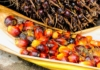 The palm oil problem